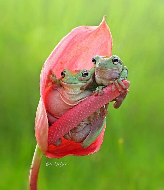 【捕捉瞬间的精彩 精彩的小动物摄影作品】-【联想】