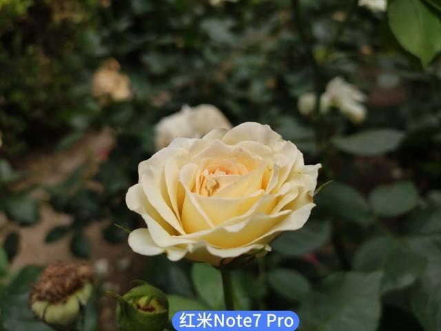 realme X/红米Note7 Pro PK谁是千元拍照王